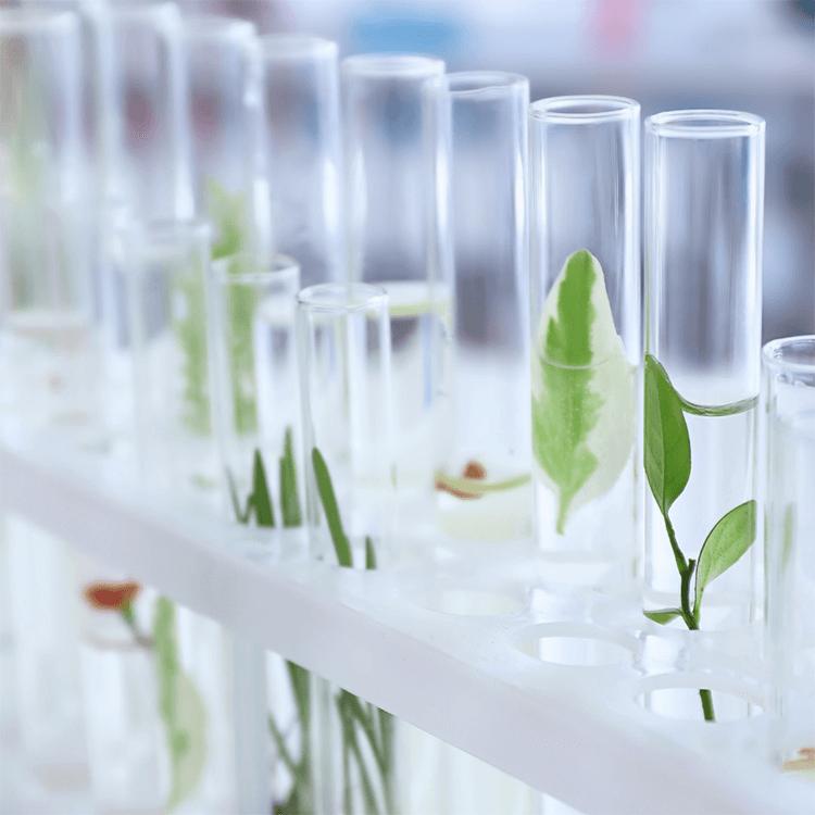 植物と科学の融合
