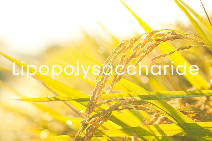 L - Lipopolysaccharide LPS