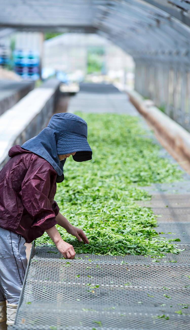 沖縄県宮古島の自社農場で栽培しています。