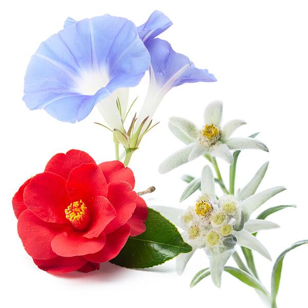 6種の植物幹細胞