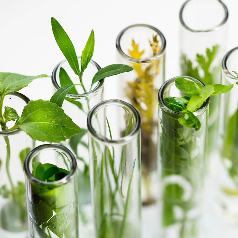 植物と科学の融合 オプティモ